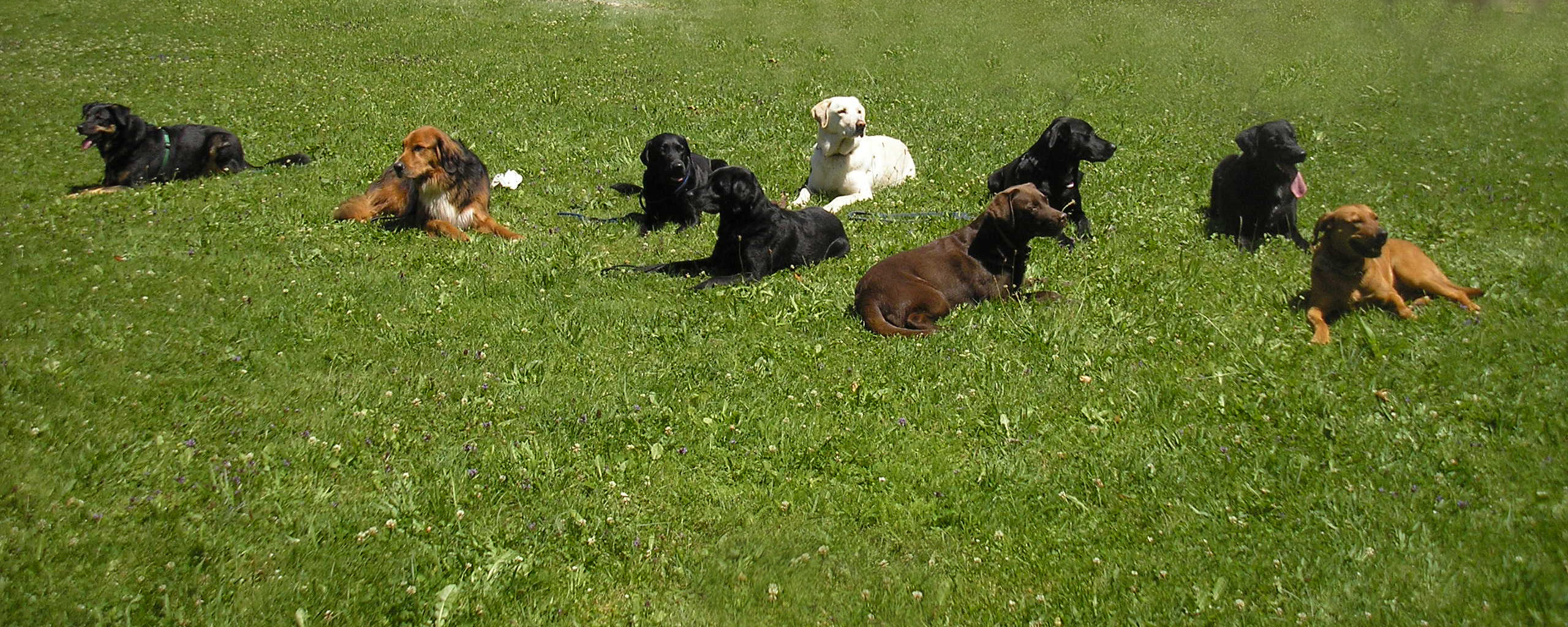 lech-camping-augsburg-service-hundeschule